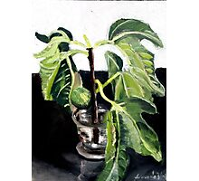 Fig Photographic Print