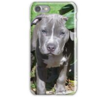 Gorgeous Baby Pit Bull Puppy Dog iPhone Case/Skin