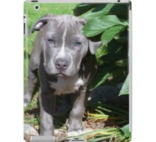 Gorgeous Baby Pit Bull Puppy Dog iPad Case/Skin