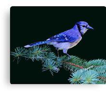Beautiful Blue Jay Art Print Canvas Print