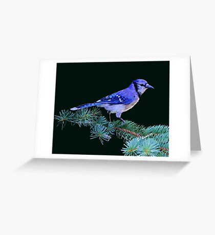 Beautiful Blue Jay Art Print Greeting Card