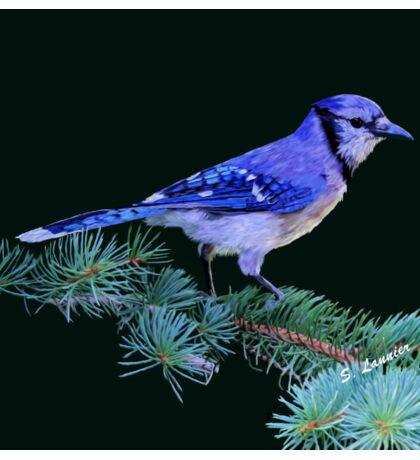 Beautiful Blue Jay Art Print Sticker