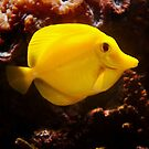 Smile ! - Happy Yellow Tang by steppeland