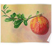 Pomegranate fruit still life Poster