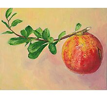 Pomegranate fruit still life Photographic Print