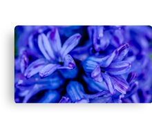 Pretty Flower Canvas Print