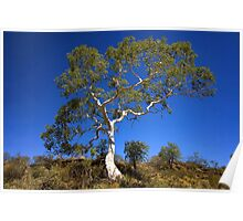 Ghost Gum - Northern Territory Poster
