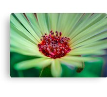 Living Daisy Stone in Green Canvas Print