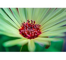Living Daisy Stone in Green Photographic Print