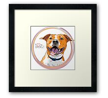 American Staffordshire Terrier Framed Print