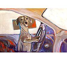 Dog Driving Photographic Print