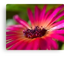 Daisy Stone in Pink - Living Community Canvas Print