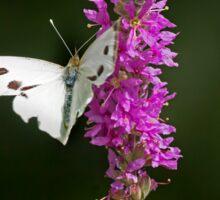 Butterfly 2. Sticker