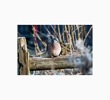 Winter Wood Pigeon. Classic T-Shirt