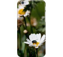 Bluebottle on Flower. iPhone Case/Skin