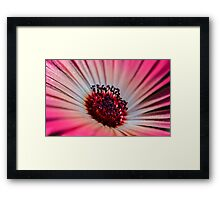 Daisy Stone in White & Pink - Living Community Framed Print