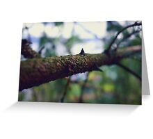 Bokeh Branch! Greeting Card