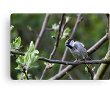Sparrow in  Woodland 2. Canvas Print