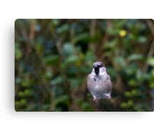 Hopping Sparrow 2. Canvas Print