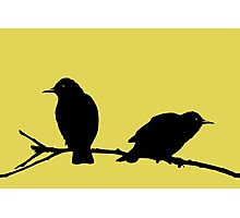 Starlings Yellow. Photographic Print