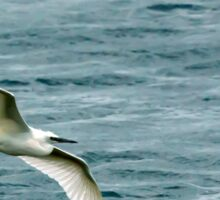 A Little Egret flying over a lake. Sticker
