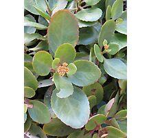 Flores de Terra Photographic Print
