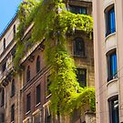 trepadeira. green  by terezadelpilar ~ art & architecture