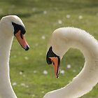Pair of Swans by Ellesscee