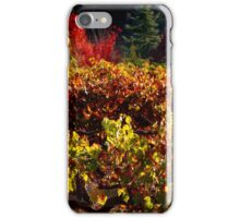 Autumn Vineyard Landscape iPhone Case/Skin