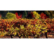Autumn Vineyard Landscape Photographic Print