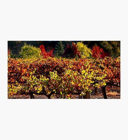 Autumn Vineyard Landscape Photographic Print
