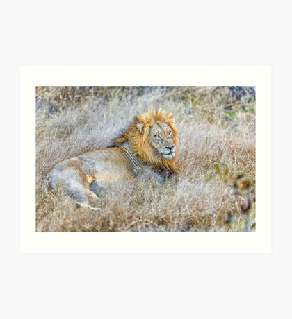 Lion, King of the Jungle Art Print