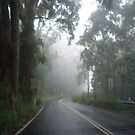 Photo of a misty foggy road through the forest. by Mary Taylor