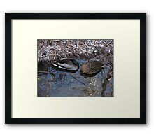 Sleeping Mallard Duck Pair Framed Print