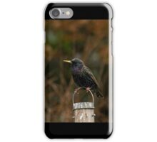 Common Starling iPhone Case/Skin