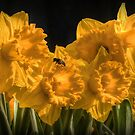 Spring .... flowers and bees by Thea 65