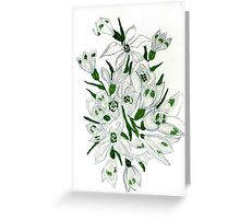 Snowdrop Flowers Painting 2 Greeting Card