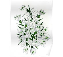 Snowdrop Flowers Painting 2 Poster