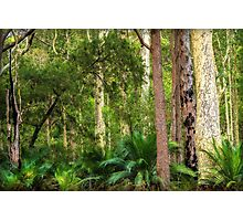 Budawang Forest Photographic Print