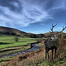 The Trough Of Bowland by Irene  Burdell