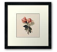 Pink Roses Vintage printing  Framed Print