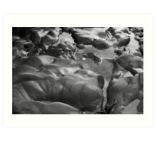 Tide Pools I BW Art Print