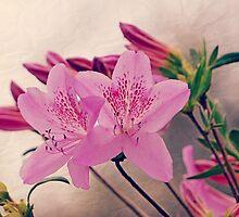 Azalea Blooms by Susan S. Kline