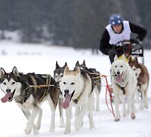 sleddog run by Alessandra Antonini