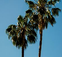 Palm Pair by Jake Kauffman