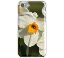 Daffodils in Spring in a Kentish garden iPhone Case/Skin