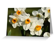 Daffodils in Spring in a Kentish garden Greeting Card