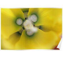 Flower, Walled Garden Poster