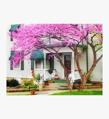 Canopy of Pink Photographic Print
