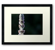 macro shot of a bumblebee collecting pollen from the  flower  Framed Print